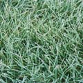 Landscaping tips to prepare your lawn for winter