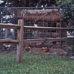 "The ""Montana Hanna's Egg Factory"" - working chicken coop"